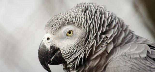 Heb jij ook weleens een papegaai op je schouder?
